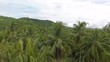Drone ascending through tall coconut palm trees gives view of flooded agricultural plots in low land near the beach and tropical rainforest on hillsides in the distance with a brilliant sky horizon.