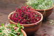 canvas print picture - Micro greens sprouts of beetroot in ceramic bowl