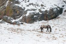 Dappled Horse, Dappled Landscape