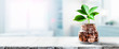 canvas print picture - Plant Growing Out Of Coin Jar On Table In Office -  Investing / Business Success Concept