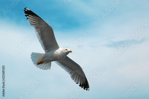 Fotografie, Tablou  Seagull flying in the sky