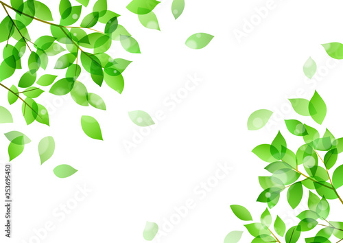 Photo  Fresh green and sunbeams background material