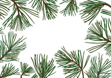 Pine Branches With Green Needles
