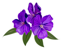Glory Bush Flower Vector Illustration