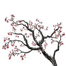 Sakura Tree, Cherry Blossom Vector Illustration On White Background