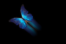 Tropical Flying Butterfly Isolated On Black Background. With A Luminous Trace
