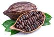 Leinwandbild Motiv Cocoa pods and cocoa beans - chocolate basis isolated on a white background.