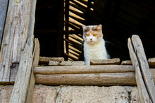 Adorable Farm Cat With Bright Yellow Eyes Enjoying The Sun By The Barn Door, Looking Down. Authentic Lovely Countryside Scene.