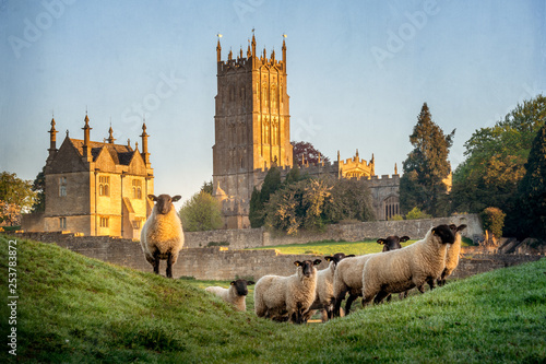 Deurstickers Schapen Cotswold sheep neer Chipping Campden in Gloucestershire with Church in background
