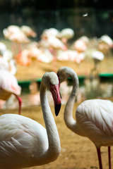 flamingo w zoo