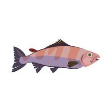 Tropical Water Bonefish. Atlan...