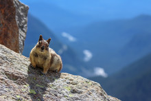 Chipmunk Portrait In Mt. Rainier, WA