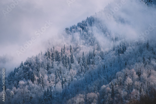 Fir trees under the snow. Mountain forest in winter. Christmas landscape. The path in the snow.