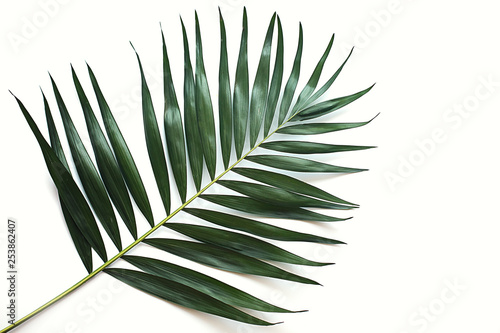 Canvas Prints Palm tree green tropical leaf on white background