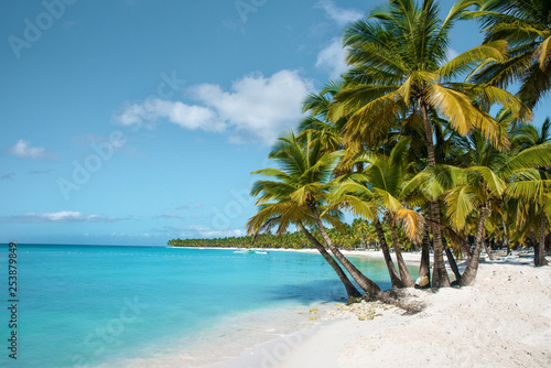 palm tree on the beach saona island