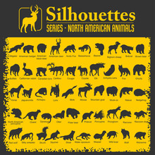 Silhouettes - North American A...