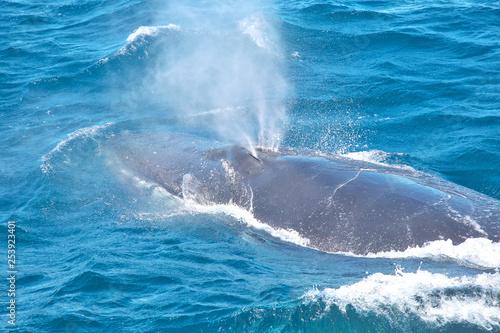Photo humpback whale blowhole spout