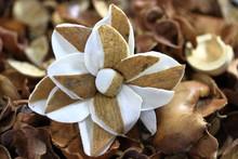 A Close Up Color Image Of A Potpourri Flower.