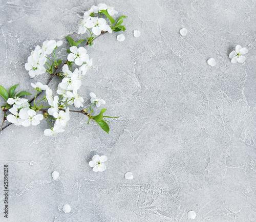 Foto auf Leinwand Baume Spring cherry blossom