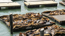 Pier 39 In San Francisco With ...