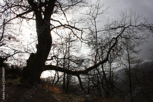 Fotografía  distressing and fairy-tale dark tree trunks