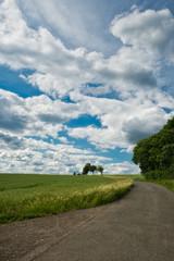 Krajobraz z polami w lecie