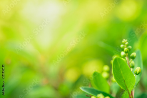 obraz lub plakat Close up beautiful view of nature green leaves on blurred greenery tree background with sunlight in public garden park. It is landscape ecology and copy space for wallpaper and backdrop.