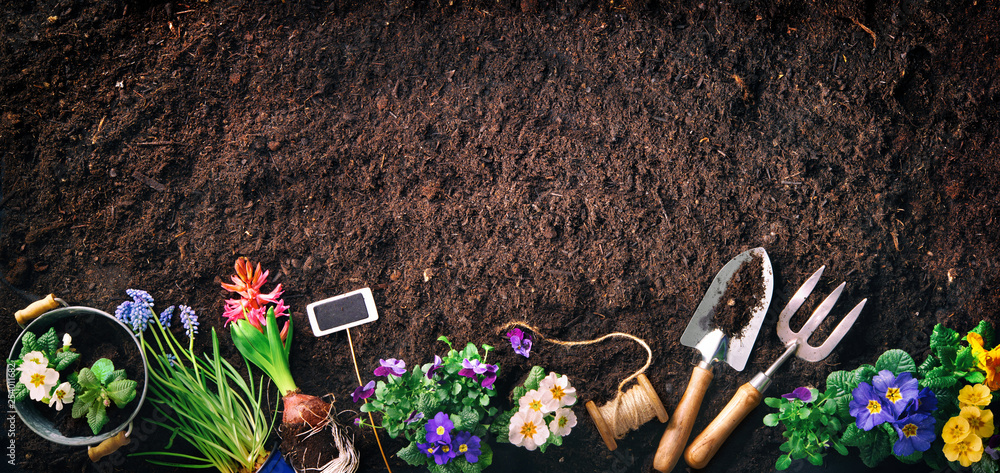 Fototapety, obrazy: Gardening tools and flowers on soil