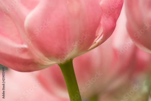 Photo  Pink flower