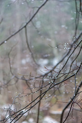 tree branches in bushes in winter cold weather