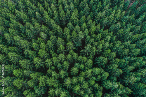 Fototapeta  Aerial view of green conifer treetops in forest, Germany