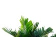 Tropical palm leaves on white isolated background for green foliage backdrop
