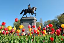 Boston Public Garden Tulips An...
