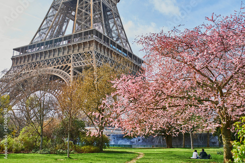 Obraz couple in love admiring beautiful pink cherry blossom near the Eiffel tower in Paris - fototapety do salonu
