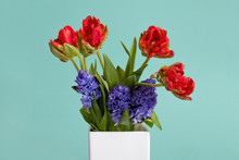 Red Tulips And Blue Hyacinth Flowers In White Vase