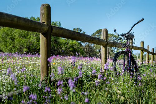 Field of purple flowers with bicycle on wood fence Fototapet
