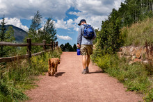 Man Walking Labradoodle Dog On...