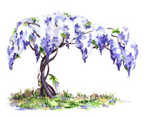 Blue Blooming Wisteria Vine. Hand Drawn Sketch, Watercolor Illustration