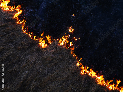 fire. wildfire, burning pine forest in the smoke and flames. Canvas