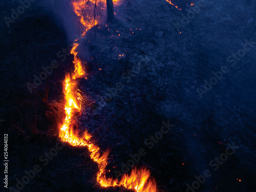 Valokuva  fire. wildfire, burning pine forest in the smoke and flames.