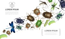 Realistic Insects Colorful Collection