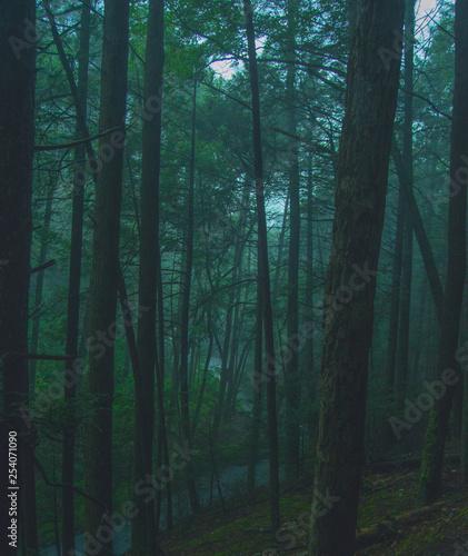 Foto auf Acrylglas Wald im Nebel Hidden Gem
