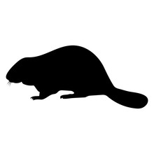Silhouette Of A Beaver. Black On White Background