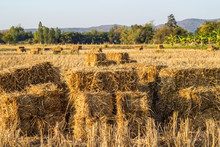 A Farm Field In The Countryside Filled With Straw Bales After Harvesting