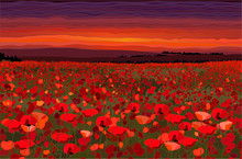 Bright Poppy Field With Sunset Sky Vector Illustration