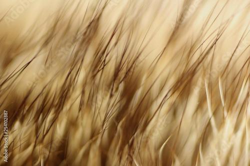 Abstract Fur