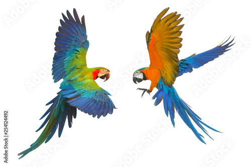 Fond de hotte en verre imprimé Perroquets Colorful flying parrot isolated on white, Red and Blue Macaw and Blue and Gold Macaw
