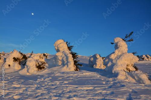 Obraz Ośnieżone drzewa, księżyc na niebie - fototapety do salonu