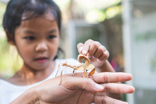 Cute Asian Child Girl Looking And Touching Leaf Grasshopper That Stick On Parent Hand With Curious And Fun In The Zoo