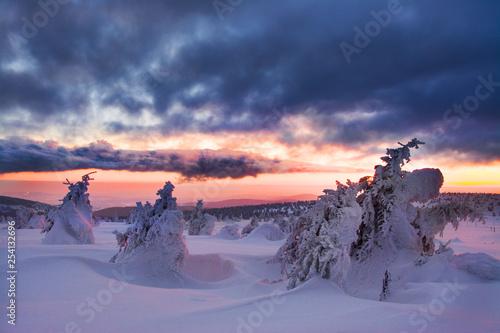 Garden Poster piękny zachód słońca, śnieżna zima